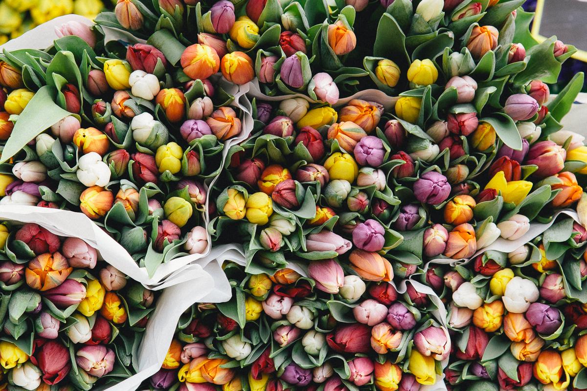 essay on the flowers by alice walker